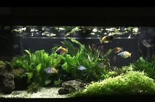 My Aquarium on Mar 29, 2017