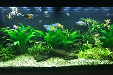 My Aquarium on Mar 30, 2017