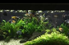 My Aquarium on Apr 3, 2017