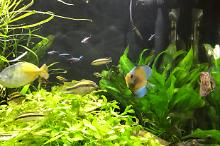 My Aquarium on Apr 7, 2017