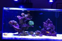 New Coral and Fish System Thumbnail
