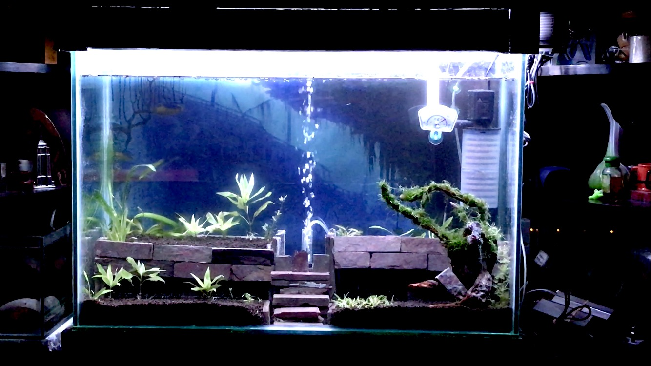 My Aquarium on April 17, 2017