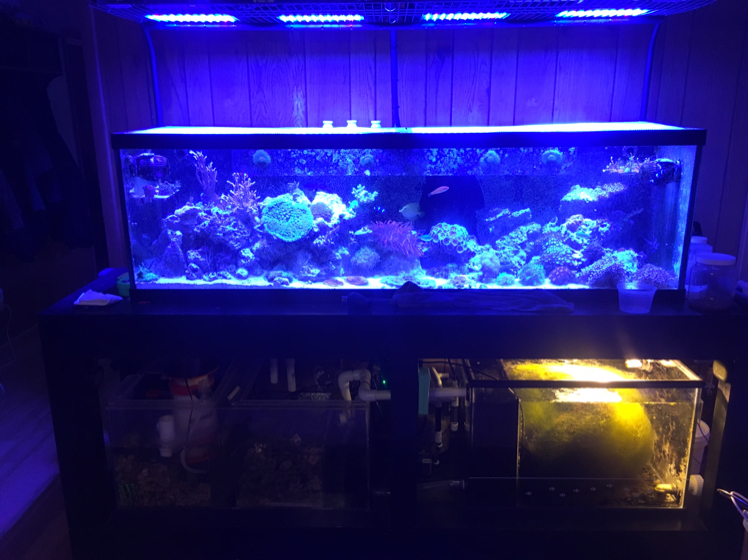 My Aquarium on Apr 20, 2017