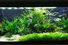My Aquarium on Apr 30, 2017