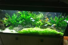 My Aquarium on May 8, 2017