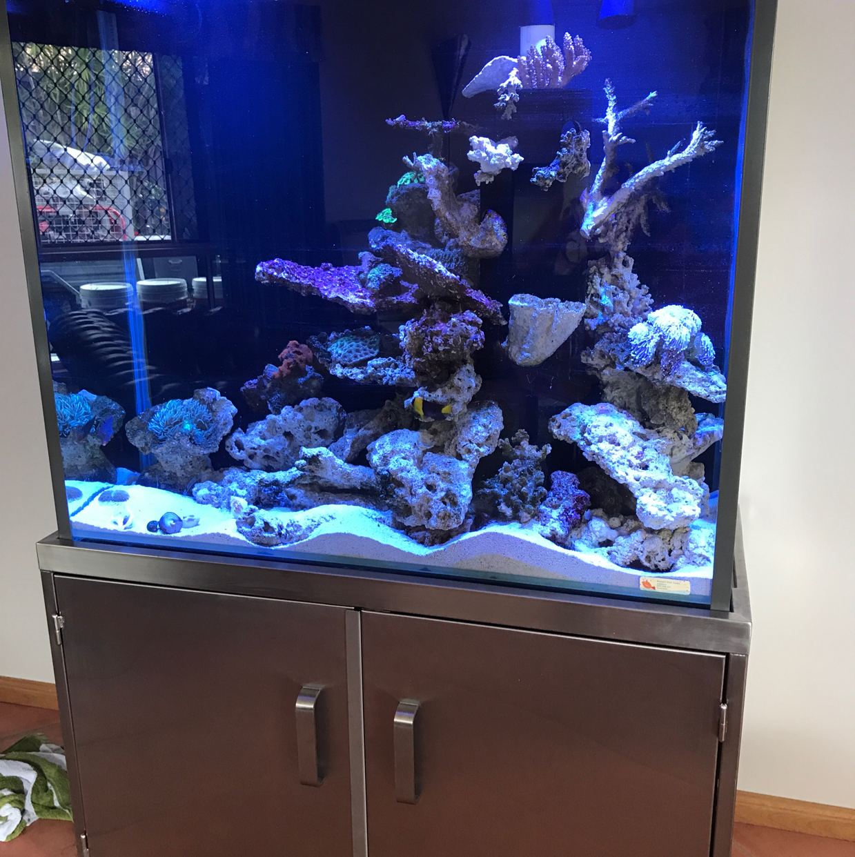 My Aquarium on May 13, 2017