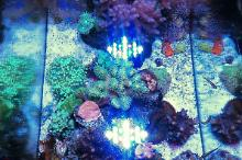 20G Mixed Reef Thumbnail