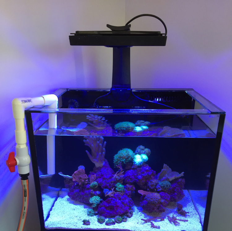 Frag Tank on May 15, 2017