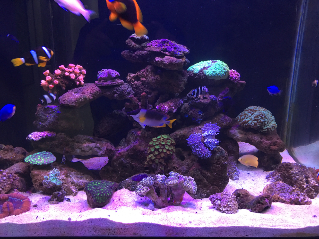 My Aquarium on May 15, 2017