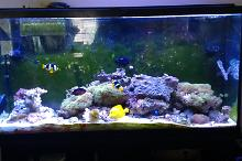 60 Gallon on May 18, 2017