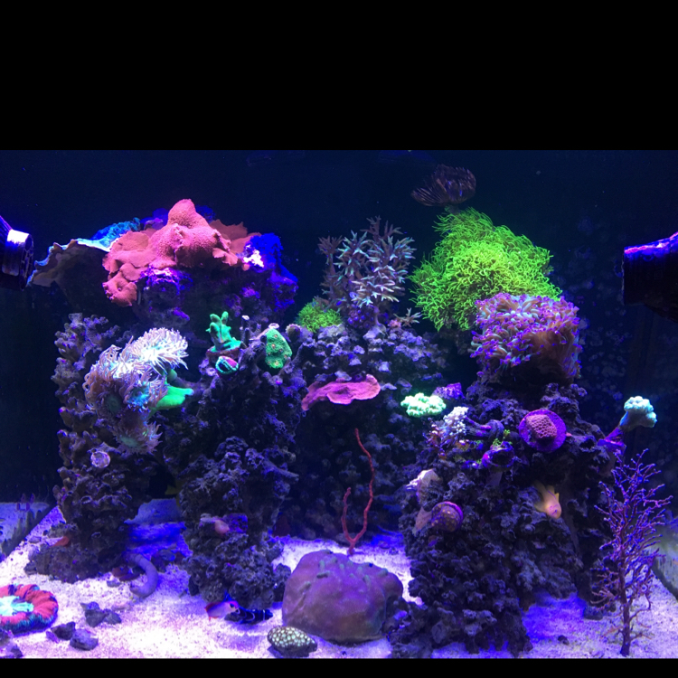 Rikki Reef Tank on May 18, 2017
