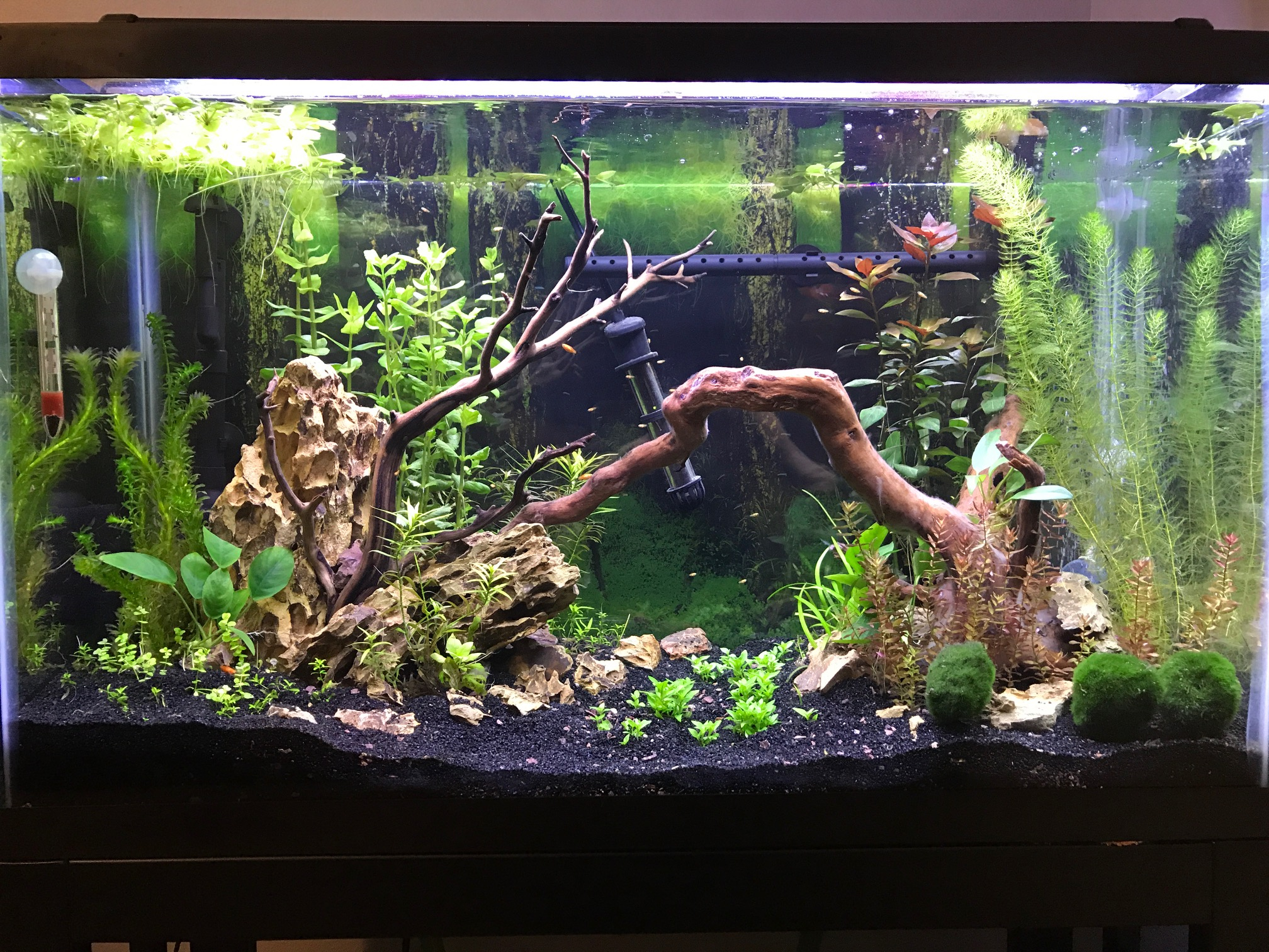 Planted tank on May 19, 2017