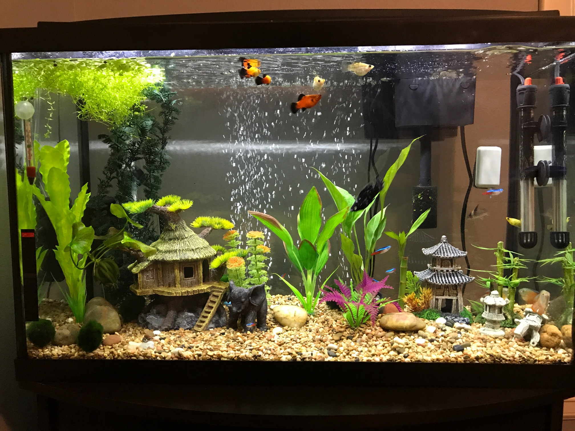 Non planted tank on May 19, 2017