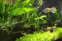 My Aquarium on May 25, 2017
