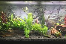 My Aquarium on May 27, 2017