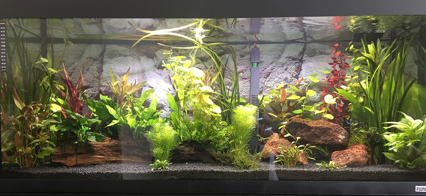 Fluval Main on June 17, 2017