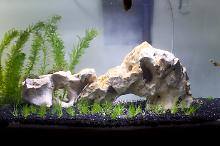 Office Tank Thumbnail