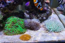 My Aquarium number 2 Thumbnail