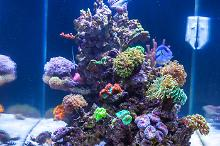 My Aquarium on July 13, 2017