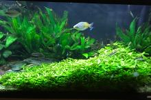 My Aquarium on Jul 23, 2017