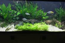 My Aquarium on Jul 24, 2017