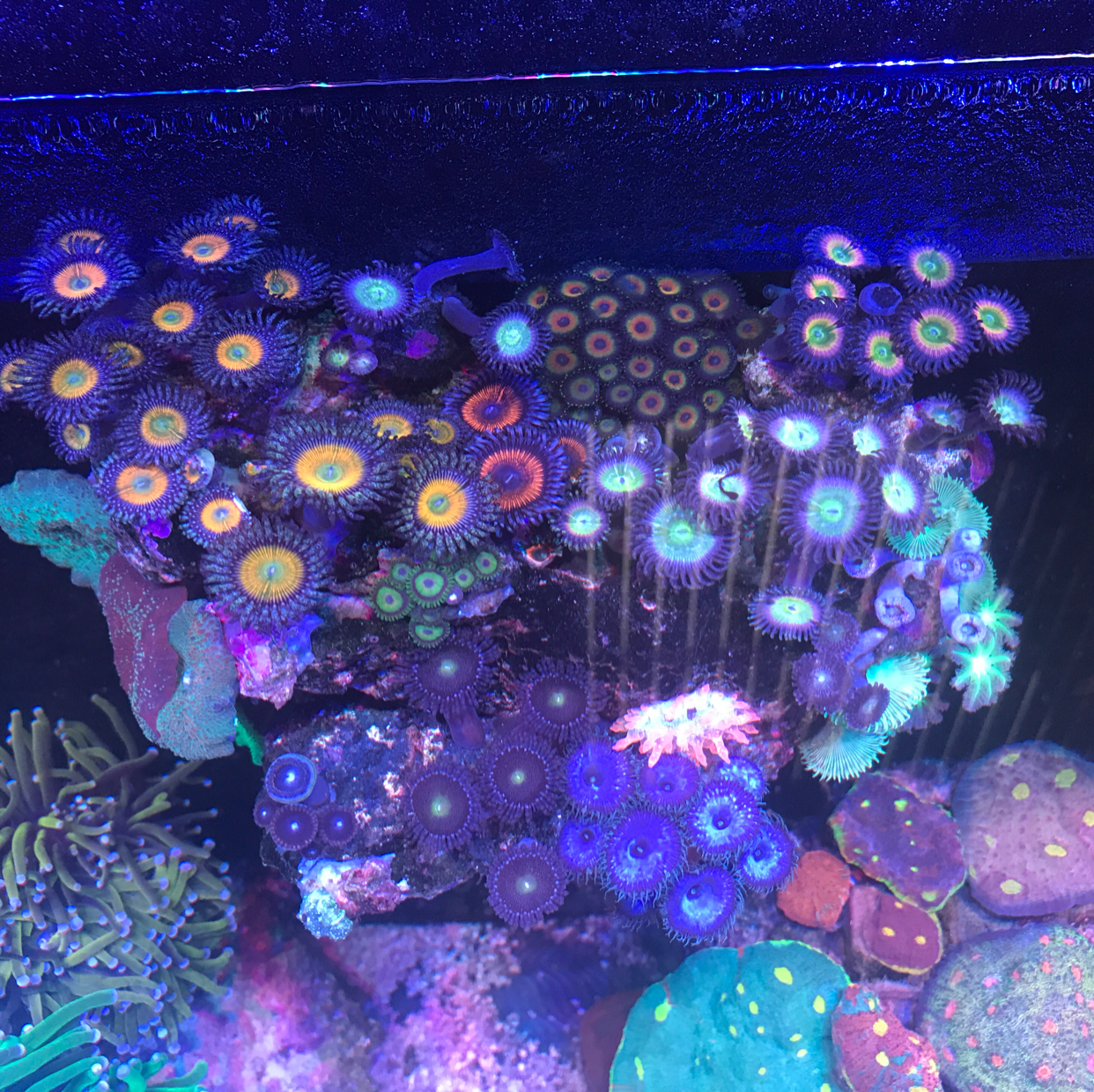 My Aquarium on Aug 12, 2017