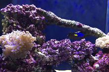 Aqua One Mini Reef 150 Thumbnail