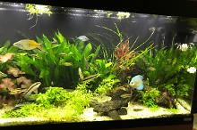 My Aquarium on Aug 24, 2017