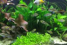 My Aquarium on Sep 5, 2017