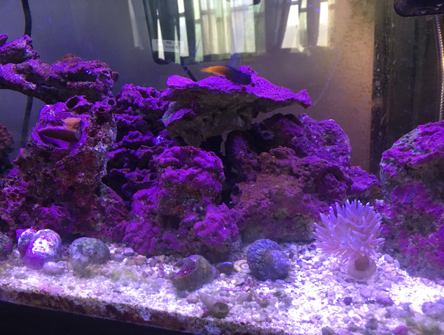 55 gallon reef on Sep 12, 2017