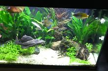 My Aquarium on Sep 14, 2017