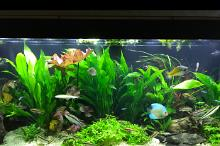 My Aquarium on Sep 23, 2017