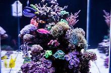 My Aquarium on October 1, 2017