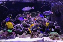 150G Mixed Reef Thumbnail
