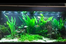 My Aquarium on Oct 22, 2017