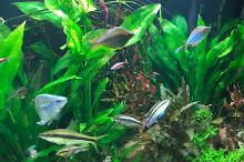 My Aquarium on Oct 26, 2017