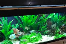 My Aquarium on Oct 28, 2017