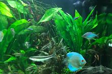 My Aquarium on Nov 1, 2017