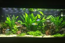My Aquarium on Nov 6, 2017