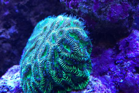 Liviu's Mixed Reef Tank Thumbnail