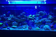 Our mixed Reef on November 12, 2017