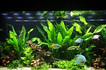 My Aquarium on Nov 16, 2017