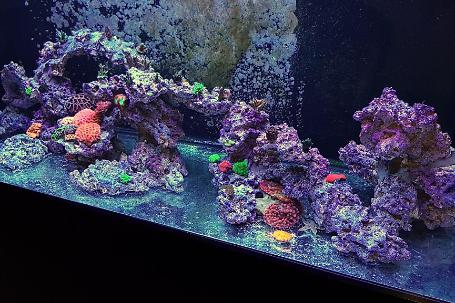 Rods Reef Thumbnail