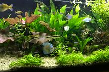 My Aquarium on Jan 9, 2018