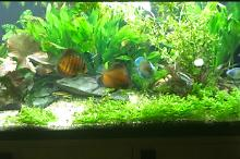 My Aquarium on Jan 20, 2018