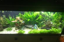 My Aquarium on Jan 21, 2018