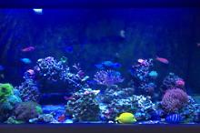 My Aquarium on Jan 23, 2018