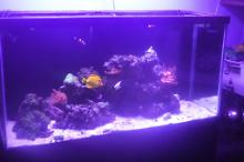 90 gallon mixed reef  on January 27, 2018