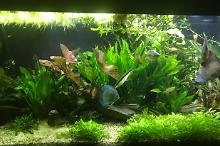 My Aquarium on Feb 2, 2018