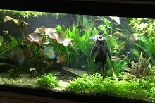 My Aquarium on Feb 4, 2018